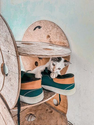 Sad cat waiting for food