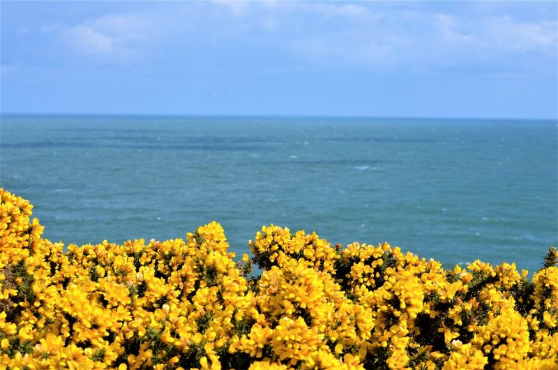 Sea Horizon Beauty In Nature Horizon Over Water Water Sky Scenics - Nature Flower Nature Plant Yellow Flowering Plant No People Growth Tranquil Scene Land Tranquility Day Blue Outdoors
