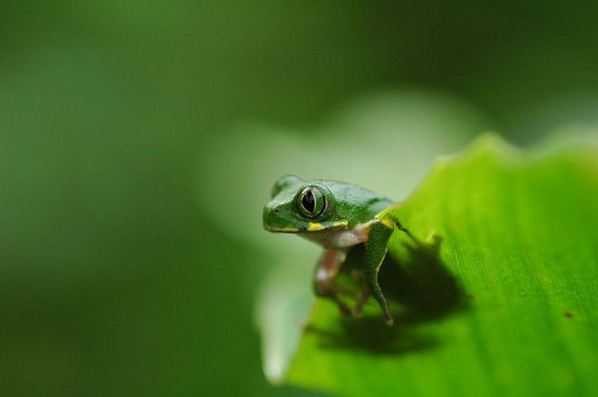 Colour Of Life Frog Green Rainforest Uganda  Africa Nature Nature Conservation Biodiversity Wildlife EyeEm Nature Lover Color Palette