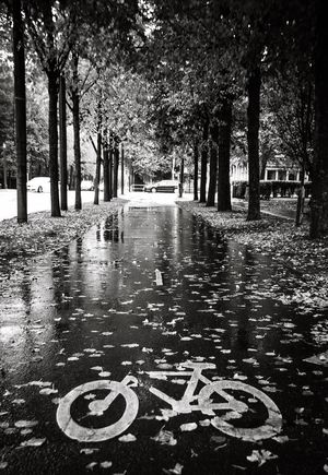 Adapted To The City Wet Outdoors Text City Göteborg, Sweden B&w Street Photography Rainy Season
