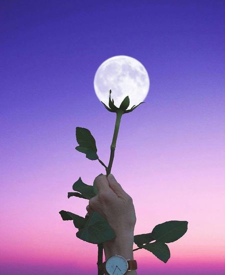 Moon Silhouette Leaf Outdoors No People Low Angle View Nature Beauty In Nature Flower Clear Sky Night Sky Close-up Freshness EyeEm Selects Live For The Story Bird EyeEmNewHere The Week On EyeEm