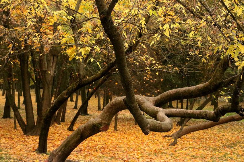 Autumn Autumn Colors Belarus Soviet Era Trees Leaves Seasons Soviet Soviet Architecture Travel Destinations