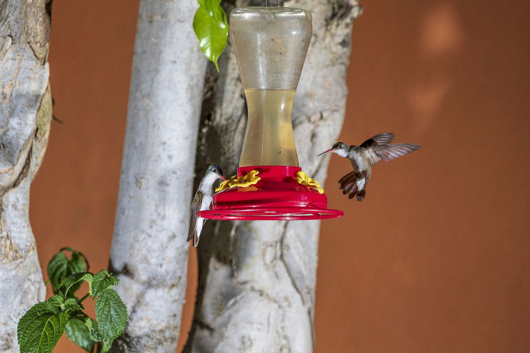 Animal Themes Animal Animal Wildlife One Animal Animals In The Wild Bird Bird Feeder Red Vertebrate Hummingbird No People Close-up Drink Day Focus On Foreground Nature Food And Drink Food Wood - Material Flying Glass