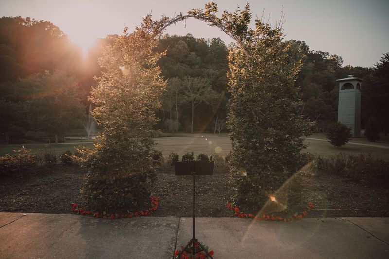 Last light. Plant Tree Decoration Nature Building Exterior Architecture No People Built Structure Outdoors Day Building Illuminated