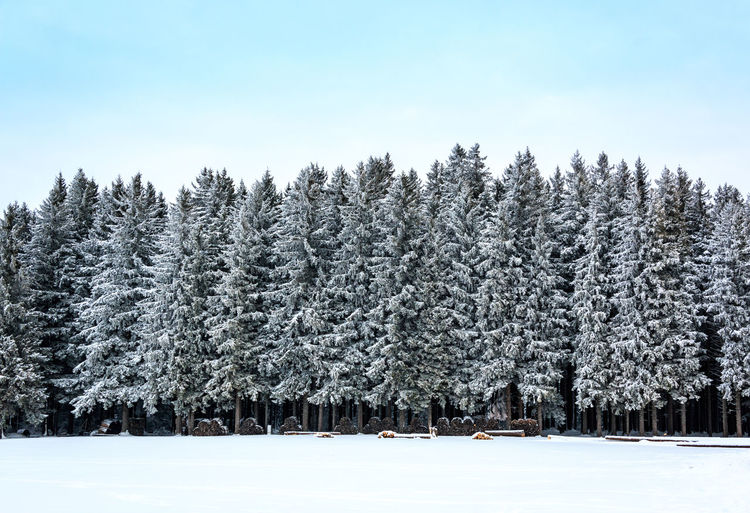 Snowy Trees Snowy Trees Tree Winter Snow Cold Temperature Plant Beauty In Nature Tranquility Sky Land Nature Tranquil Scene Scenics - Nature Growth Field Forest Day No People Covering Non-urban Scene Outdoors WoodLand Coniferous Tree