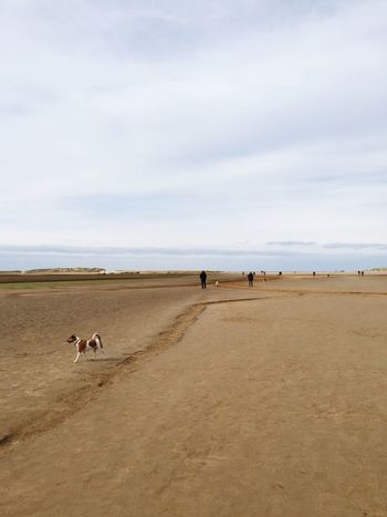 Beach impressions in Norfolk Sand Beach Sky Nature Dog Sea Domestic Animals Cloud - Sky Scenics Beauty In Nature Mammal Sand Dune Day Men Water Outdoors Pets Togetherness Horizon Over Water Real People
