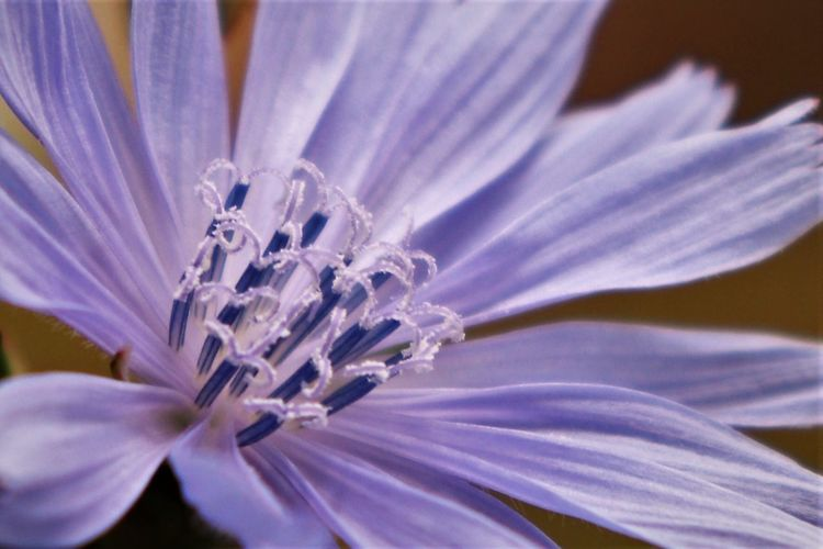 Flowering Plant Flower Fragility Vulnerability  Freshness Plant Beauty In Nature