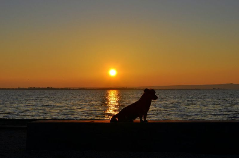 Silhouette dog sitting at beach against sky during sunset