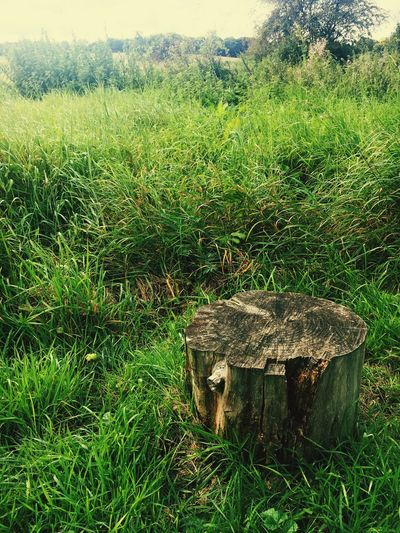 Tree_stump Nature Field Green Color No People Outdoors