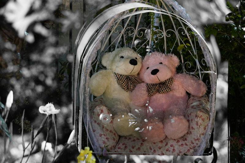 Bear Toy Bear Two Bears