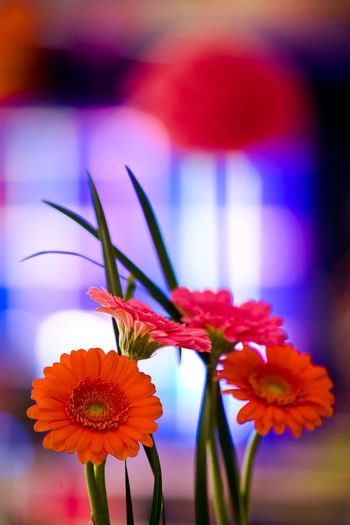 Copy Space Event Flower Arrangement Party Decoration Pink Transvaal Daisy Wedding Close-up Copyspace Decoration Flower Flower Arrangement Focus On Foreground Gerbera Gerbera Daisy No People Orange Color Orange Flower Party - Social Event Petal Pink Color Plant Plant Stem Purple Vertical The Still Life Photographer - 2018 EyeEm Awards