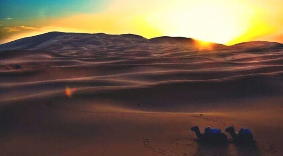 Deserts Around The World Thar Desert Camel Sunset #sun #clouds #skylovers #sky #nature #beautifulinnature #naturalbeauty #photography #landscape Relaxing Moments
