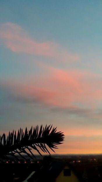 Evening Sun Inspirations Evening Sky Abendstimmung Abendhimmel Nature_collection EyeEm Best Shots Beliebte Fotos Open Edit Taking Photos Popular Photos Evening Light Sky_collection Getting Inspired Beautiful View Hello World Eye4photography  Natural Beauty