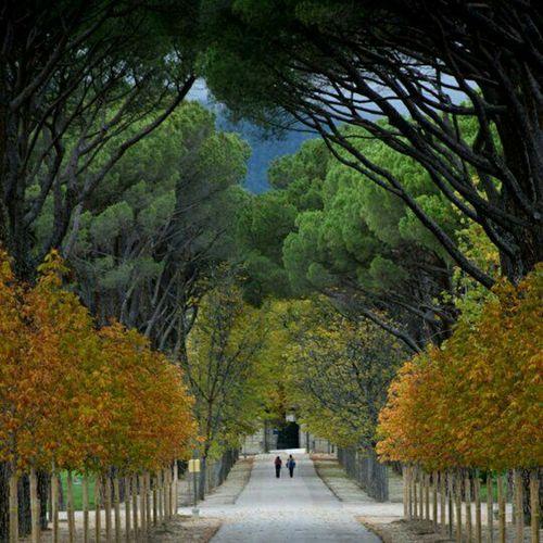 San Lorenzo De El Escorial SPAIN Españoles Y Sus Fotos Autumn Colors Nikond5300 Enjoying Life Autumnbeauty