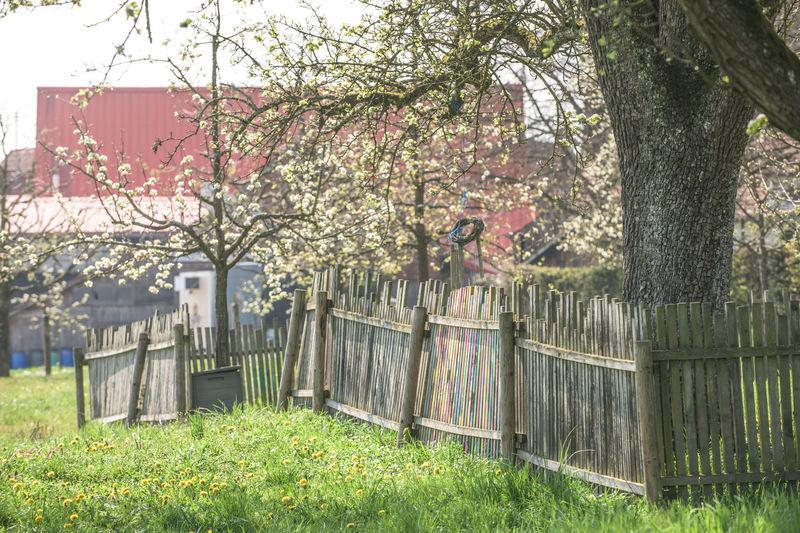 View of flowering trees in yard