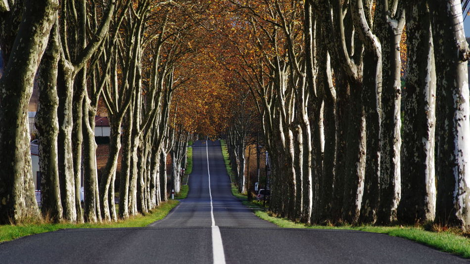 Straight Line Alignment Of Trees Alley Way Diminishing Perspective No People Outdoors Plane Trees Road Road Sign