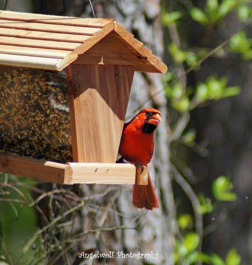 Birds Fauna Eye4photography  Cardinal Birds Of EyeEm  EyeEm Birds EyeEm Nature Lover