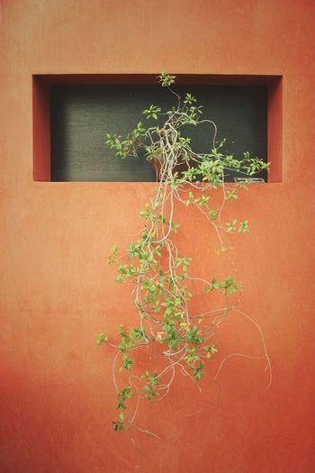 Orange | Awaji Yumebutai | Tadao Ando | Architecture Plant Green Color Growth Nature Close-up Abstract Garden Fine Art Japan Through My Eyes Beauty In Nature Wall Orange Color Architecture Traveling Awaji Island Japan |