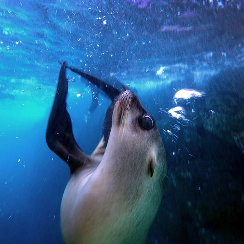 Sea Lion Pup. Baja Ocean Mexico Gopro Gopro Shots The Moment - 2015 EyeEm Awards The Great Outdoors - 2015 EyeEm Awards Share Your Adventure Animals
