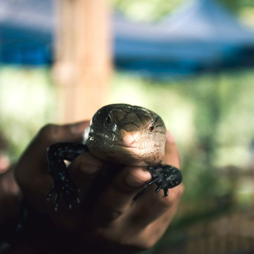 One Animal Animal Themes Animals In The Wild Close-up One Person Day Human Hand Focus On Foreground Real People Animal Wildlife Outdoors Human Body Part Reptile Tortoise Shell People Fresh On Market 2017