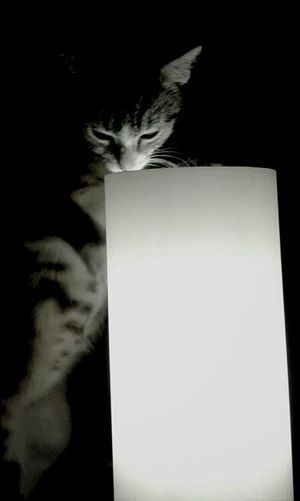 Darkness And Light Miau *-*  Cat Lovers Cute Cats Cat Pics Katzenfoto Katzen<3