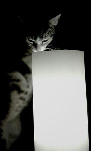 Darkness And Light Miau *-*  Cat Lovers Cute Cats Cat Pics Katzenfoto Katzen<3