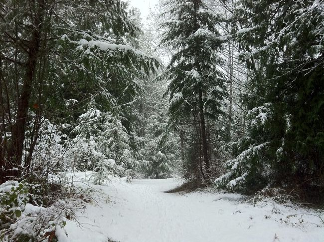 Weather Cold Wilderness Adventure Path Through The Forest Path In Nature Path In The Snow Inviting Path British Columbia, Canada Beauty In Nature Pathway In The Forest New Snow Winter Evergreen Forest Nature Beauty Walk In Nature Walk In The Woods Snowy Forest Snow Covered Cold Day Weather Photography Forestwalk Winterwonderland Winter Trees Forest IPhone Photography It's Cold Outside