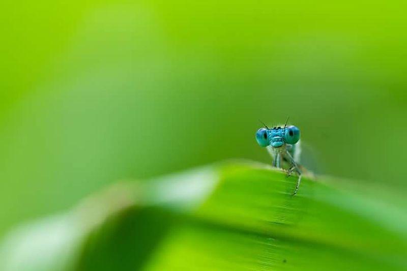 มันก็จะเหงาๆนะ อากาศแบบนี้ Insect One Animal Animal Themes Animals In The Wild Animal Wildlife Green Color Spider Leaf Selective Focus No People Nature Close-up Outdoors Day Beauty In Nature