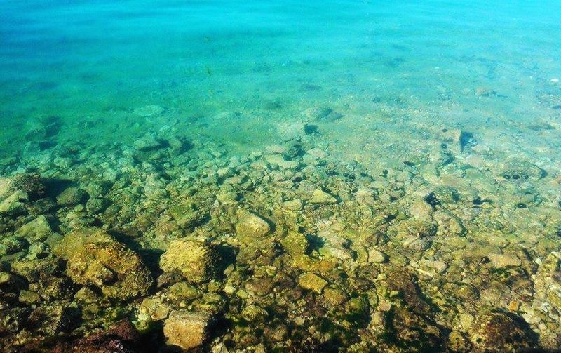 Sea Nature No