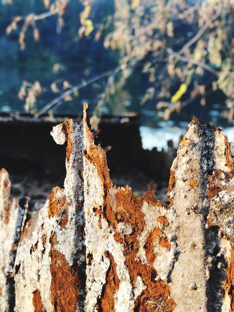 focus on foreground, day, nature, close-up, no people, weathered, rusty, rock, textured, outdoors, rock - object, solid, metal, rough, water, tranquility, wood - material, sunlight, plant, lichen