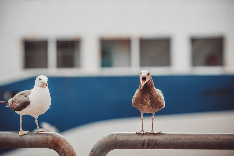 Seagulls near the sea and ship in the natural environment. competition between gulls for food