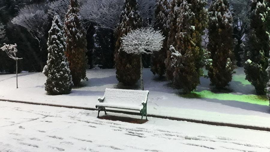 Tree Snow Road