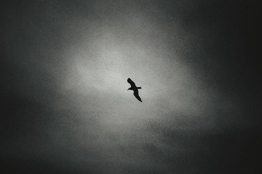 Seagull Flighing High Beach Seaside Cloudy Eye4photography  Eye4black&white  EyeEm Nature Lover Minimalism Silhouette