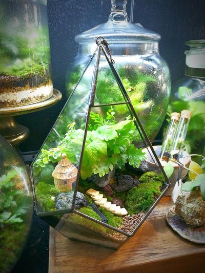 Small Garden Relaxing Green Color Enjoying Life Outdoors Garden Terrarium Glass Plants Plants And Flowers Planting Green Decoration Goog Times Growth Growing Nice Photography Decorative Enjoying Life Plant