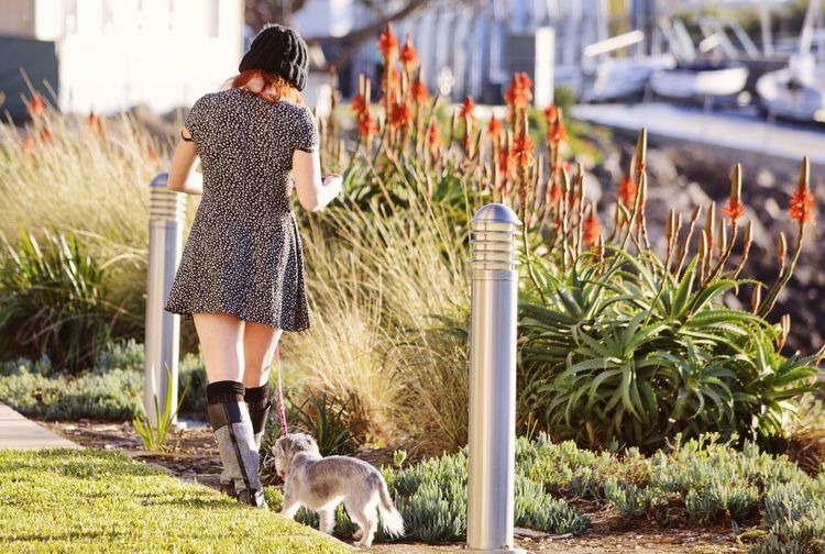 Rear view of woman walking with dog at park