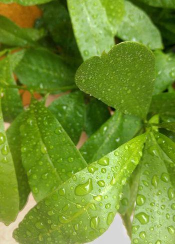 Tree Treehouse Dew