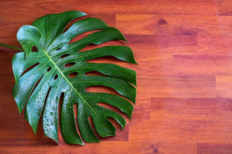 High angle view of leaf on cutting board