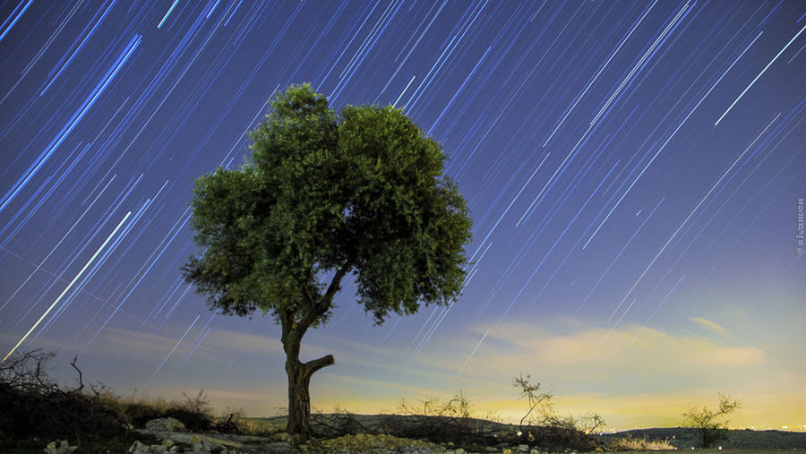 Olive Startrail Nightphotography Stars Startrails Olive Tree trees Landscape First Eyeem Photo