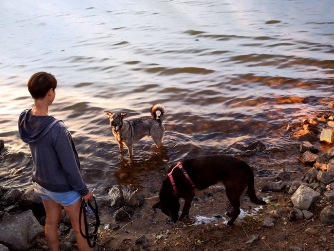 Abendspaziergang, letzte Sonnenstrahlen Young Woman With Two Dogs Enjoying A Play While The Sun Goes Down Last Sunrays Of The Day Woman With Short Hair From Behind Bright Background Lake Shore Beach. Sundown At The Lake Dogs In Water Nature Is Art Light Beams In The Water Dusk Light Stony Ground Beach Walk Lake Beach Kinzigsee Langenselbold Germany🇩🇪 Peaceful Atmosphere Calming Views Water Pets Dog Full Length Sand Beach Summer Friendship Ankle Deep In Water Wave Pet Leash Pet Collar The Great Outdoors - 2018 EyeEm Awards