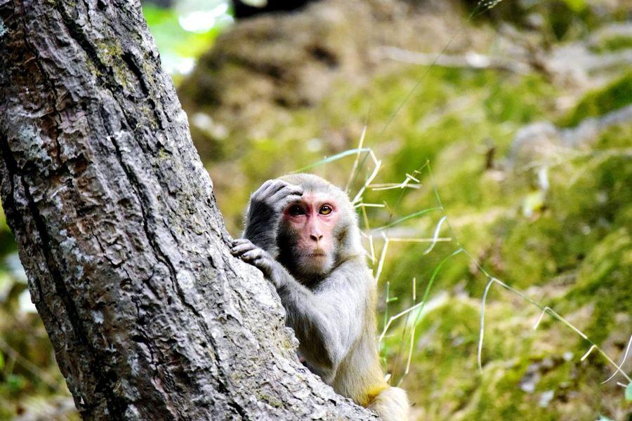 Animals In The Wild Monkey EyeEmNewHere Animal Wildlife