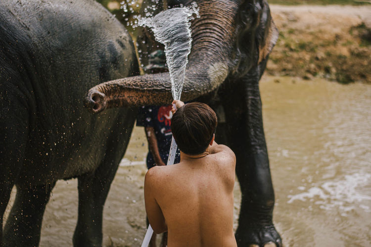 Rear view of shirtless man washing elephant with water pipe while standing in lake