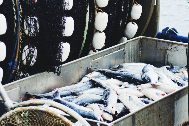 Fishes in container at market for sale