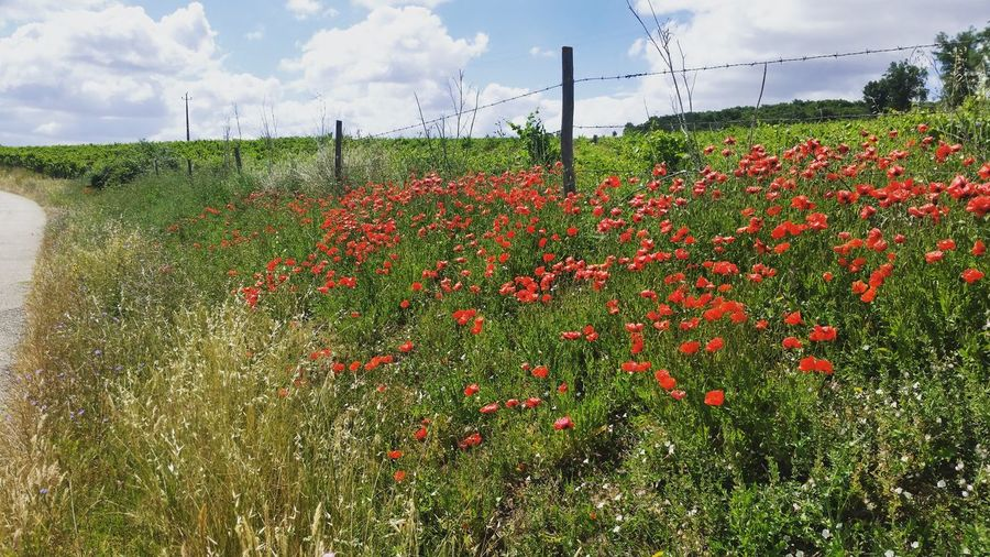 Nofilter#noedit Nature Photography Alentejo,Portugal Hello World Relaxing Check This Out Enjoying Life Flowers Holidays Summertime