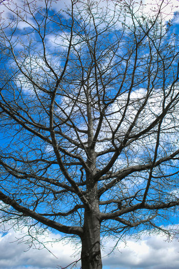 Waiting the spring in Berlin. FILIPPI GIULIA PHOTOGRAPHY. Bare Tree Beauty In Nature Berlin Branch Canon Cloud - Sky Colors Day Germany Growth Light And Shadow Nature No People Outdoors Pattern Photographer Photography Photooftheday Picoftheday Repetition Sky Sun Tranquility Tree Tree Trunk