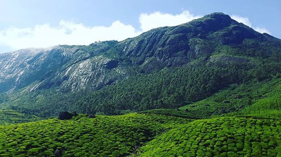 Incredibleindia Incredibleofficialindia Kereladiaries Reflectivemountains Teaplantation Valleyofgod Naturelovers Landscape_lovers Landscape Summer Greenify Photooftheday Munnartrip Munnar HEAVENONEARTH nearth