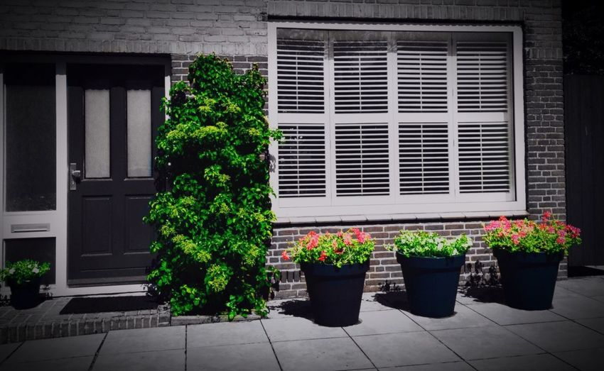 I miss summer already Potted Plant Growth Building Exterior Window Architecture Built Structure Day Pot Plant Flower Outdoors Freshness Pink Color Green No People Green Color Growing In Bloom IPhoneography Home Front Yard