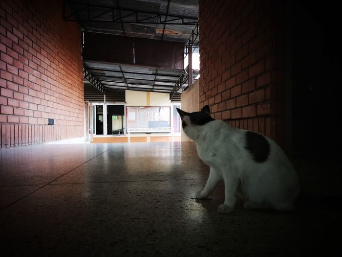 Cat looking away in a building