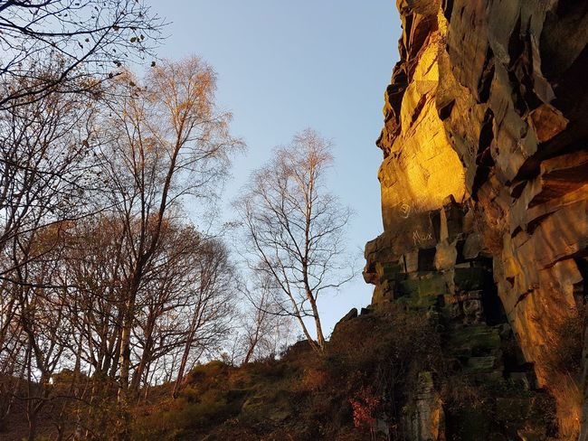 Low Angle View Tree Nature Sky No People Outdoors Day Growth Beauty In Nature Branch Freshness Close-up Sunshine Twilight Light And Shadow Rocks Hell Hole Rocks Quarry Heptonstall Climbing Hell Hole Rock - Object Rock Formation Freshness Clear Sky