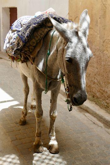 Close-up of donkey