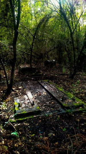 Uncovering the Past. Machiney foundations from a eletric light plant.History Historic Historical Site Forgotten Things Forgotten Place Uncovering The Past Escambia County Molino Florida Woods Woodlands Old Thing